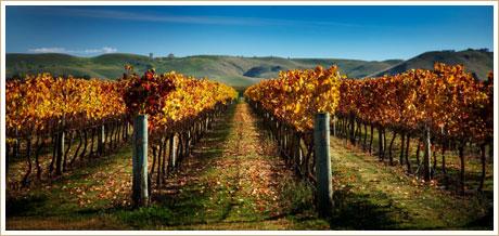 alpha-domus-vineyard.jpg